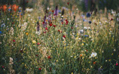 Balans tussen natuurwaarde en beleving