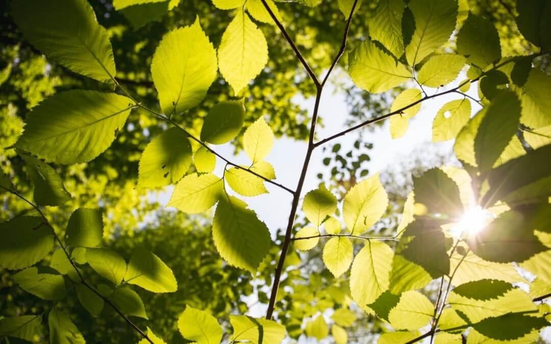 Vijf bomen voor in de tuin